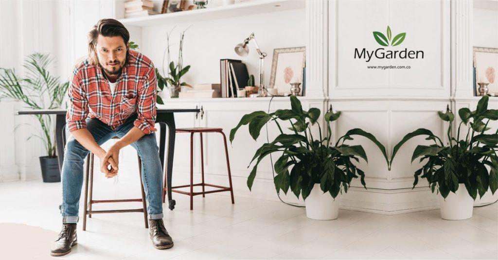 plantas para regalar a un hombre