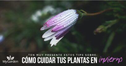 como cuidar tus plantas en invierno