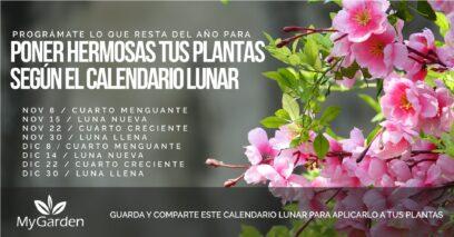 calendario lunar para plantas
